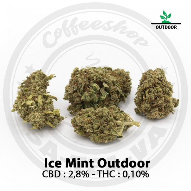 Fleurs CBD ICE MINT Outdoor