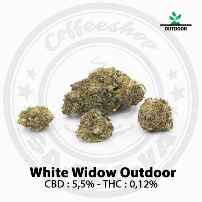Fleurs CBD WHITE WIDOW Outdoor