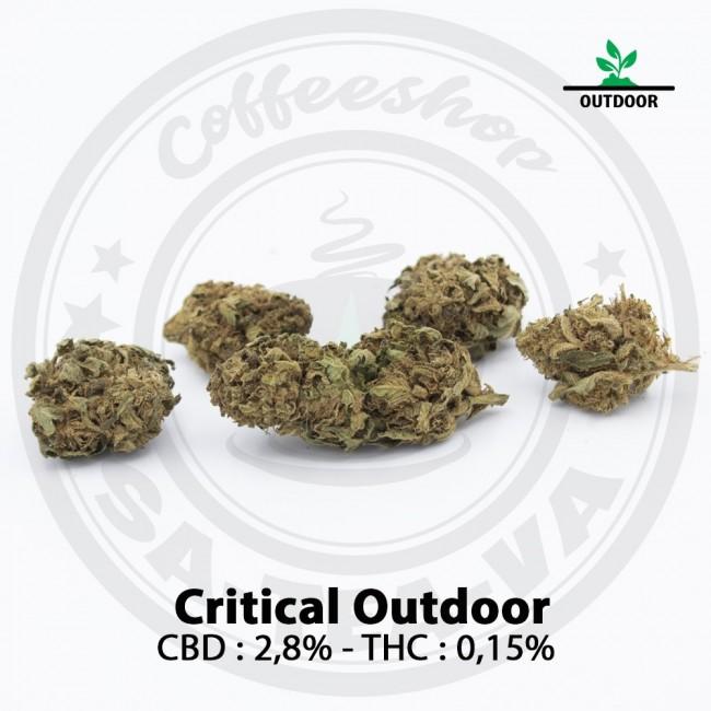 Fleurs CBD CRITICAL Outdoor