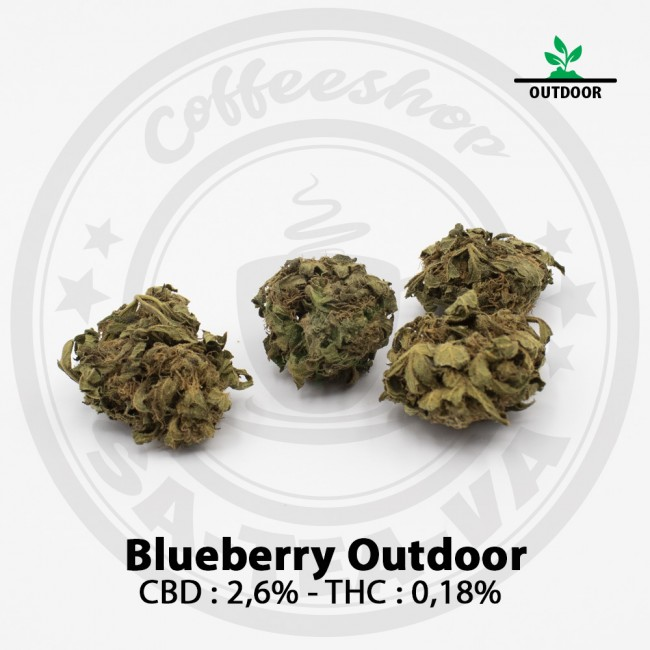 Fleurs CBD BLUEBERRY OUTDOOR
