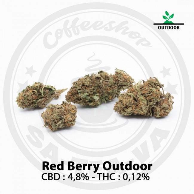 Fleurs CBD RED BERRY Outdoor