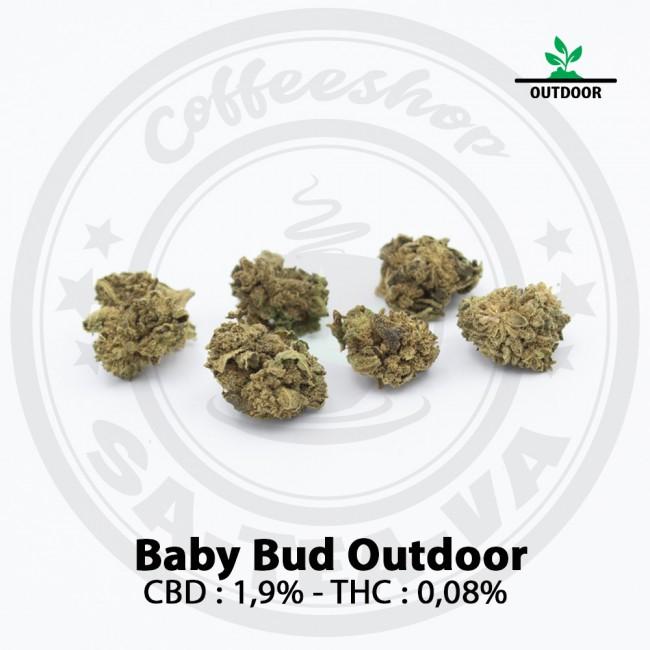 Fleurs CBD BABY BUD Outdoor